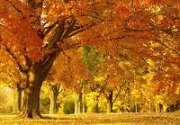秋燥当令甘润食养