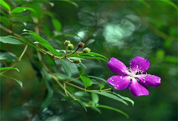 周末自驾游龙门十字水生态度假村、石门国.家森林公园