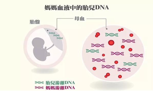 揭秘香港验血助您生下健康宝宝
