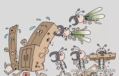 白蚁分飞季 市民莫恐慌