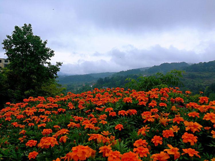 """贵州习水县有个""""网红"""" 旅游地产项目,为什么2018年这么火?"""