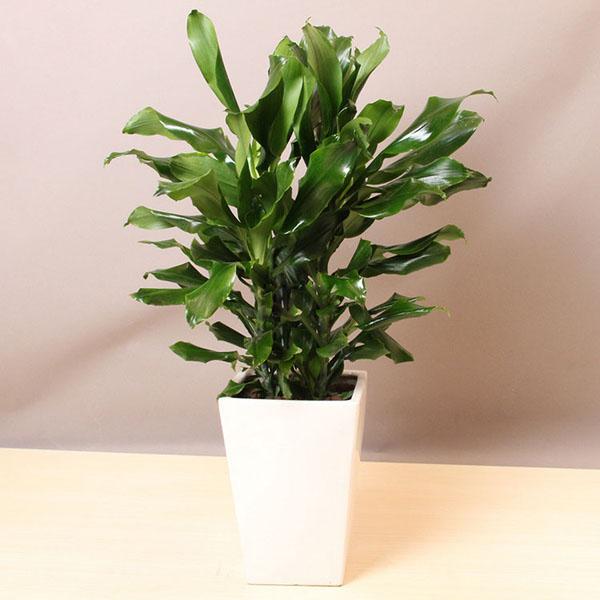 花境设计绿植办公室 含盆植物 就选爱尚花境