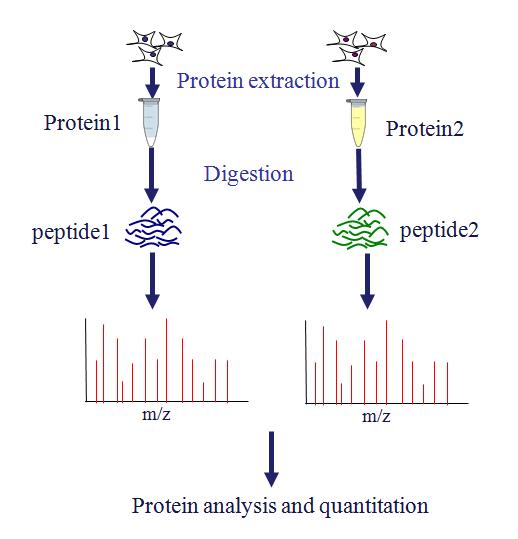 蛋白质组学设计定制