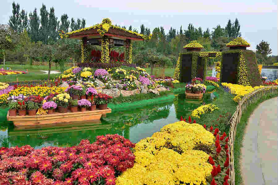 纳境园林菊花展,专业为您带来生活中的快乐