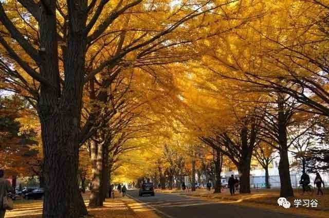 学习谷专业从事日本工作派遣移民课程