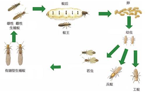 大树生活有最好的灭白蚁服务