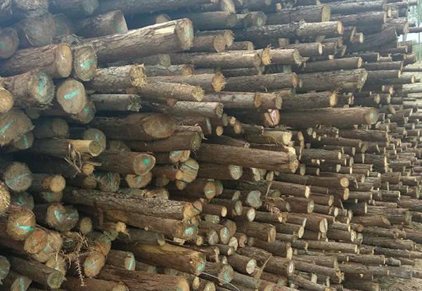 郑州杉木杆批发生产供应