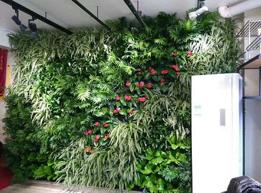 郑州绿植租赁公司,质量不打折
