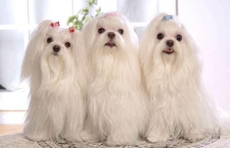 合肥宠物美容师培训新款上市,质量不变价格优惠,安徽领秀