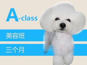 安徽领秀专业的安徽宠物美容课程行业的优选