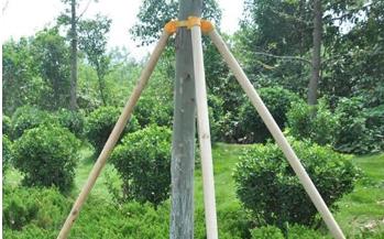 杉木杆支撑,树木支撑支杆,郑州绿化支树杆,树木固定支架,树木保护支架