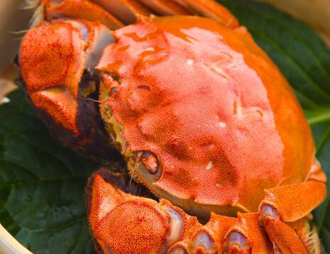 螃蟹培训产品设计生产加盟就找海上余香