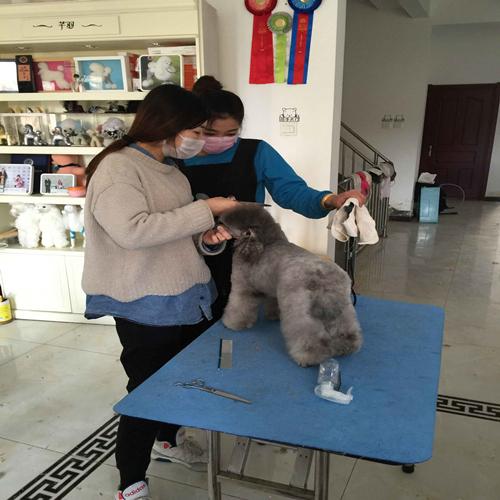 北京市宠物美容师学校培训�鞠�信息的新相关信息