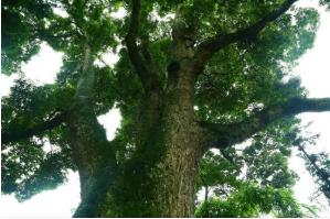上千园林提供最好的成都植物
