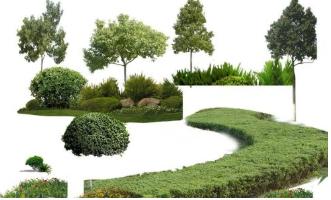 上千园林提供最好的四川苗木基地