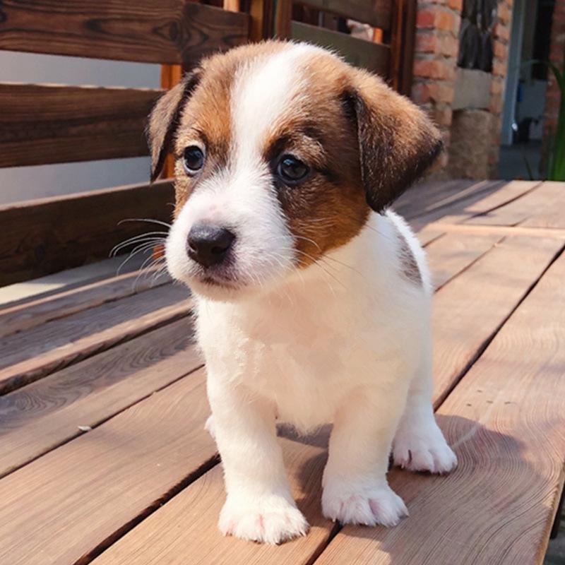 狗狗寄养哪个产品好——上海逗顽宠物宠物寄养训练值得您信赖